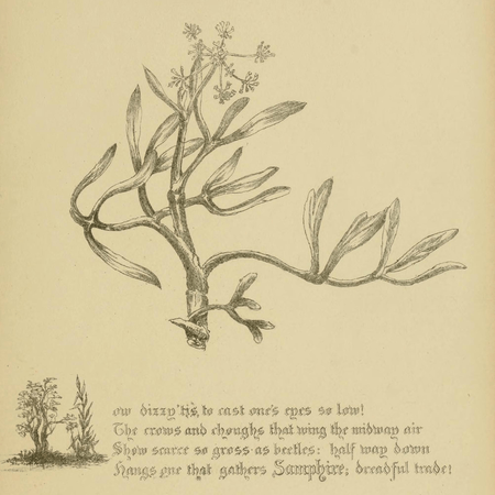 The flowers of Shakespeare depicted by Viola